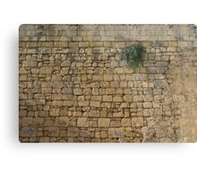 Life on Bare Rock - Up High on the Fortification Wall Metal Print