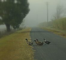 Foggy Morning Stroll by myraj