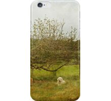 Sheep And Dog Under The Apple Tree iPhone Case/Skin