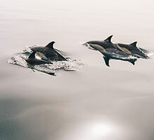 Dolphins by franceslewis
