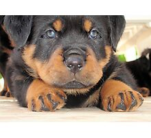Cute Rottweiler Puppy With Blue Eyes Photographic Print