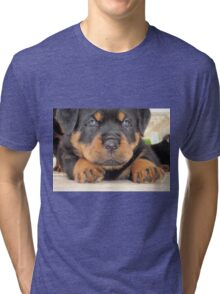 Cute Rottweiler Puppy With Blue Eyes Tri-blend T-Shirt
