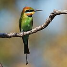 ''Rainbow Bee=eater'' by bowenite