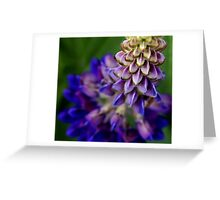 Blue Lupin Greeting Card