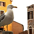 Seagull by Alvise Busetto