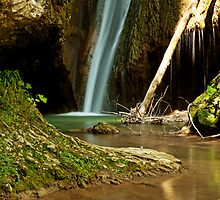 Bear Waterfall by Alvise Busetto