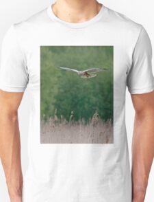 Marsh Harrier--male T-Shirt