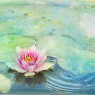lily pond by Teresa Pople