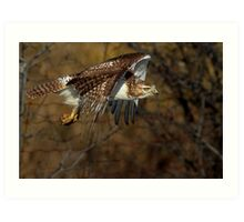 Red-tailed Hawk - Bullet Art Print