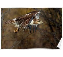 Red-tailed Hawk - Bullet Poster