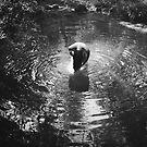 Summer swim by Pauline Greefhorst