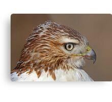 Red-tailed Hawk Portrait Metal Print