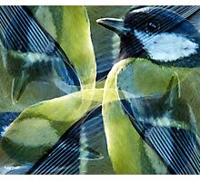 Designs Inspired By Nature: Coal Tit Photographic Print