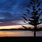 In the early morning light by John Dalkin