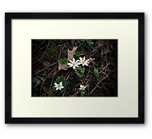 Wildflowers White Framed Print