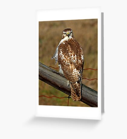 Red-tailed Hawk on fence Greeting Card