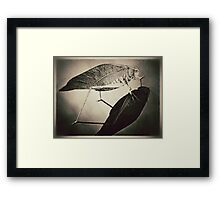 Insect (sepia) Framed Print