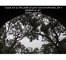 """Psalm 119:35""  by Carter L. Shepard Photographic Print"