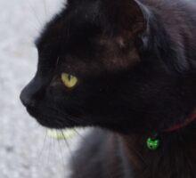Curious Cat Sticker