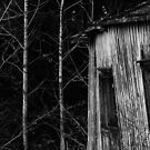 14.11.2015: Aspens and Abandoned House by Petri Volanen