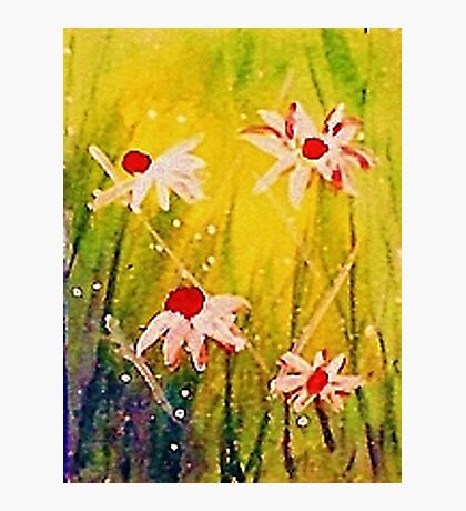#2  series of daisies Photographic Print