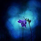 Fear of the dark by pawelmatys