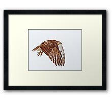 Red-tailed Hawk - Liftoff Framed Print