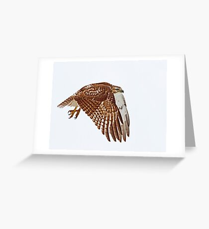 Red-tailed Hawk - Liftoff Greeting Card