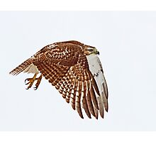 Red-tailed Hawk - Liftoff Photographic Print