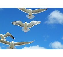Gulls and Clouds Photographic Print