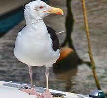 Bedraggled Gull At Lyme, Dorset. Uk by lynn carter
