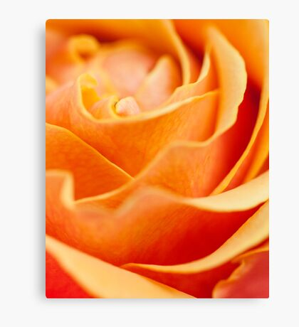 Abstract Yellow Red Rose Canvas Print