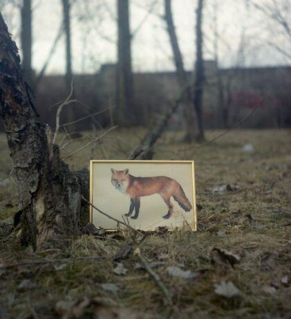 Little fox Sticker