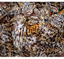 Designs Inspired By Nature: Eagle Owl Photographic Print