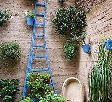 Garden Patio in Cordoba Spain by Robert Kelch, M.D.