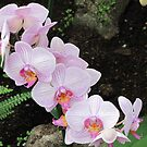 Gardens of the World - Orchids I by orko
