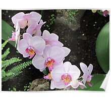 Gardens of the World - Orchids I Poster