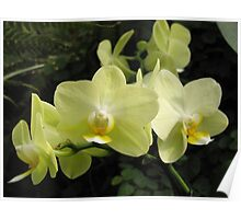 Gardens of the World - Orchids II Poster