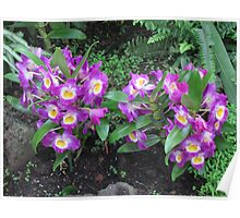 Gardens of the World - Orchids IV Poster