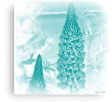 Blue Lupin Canvas Print