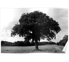 Stour River - Lone Tree Poster