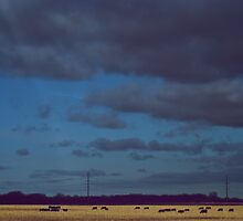 Golden Field by lindsycarranza