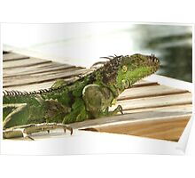 Iguana Claws Poster