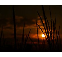 Blazing Wheat Photographic Print