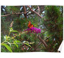 Bursting Butterfly Poster