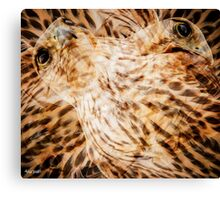 Designs Inspired By Nature: Falcon Canvas Print