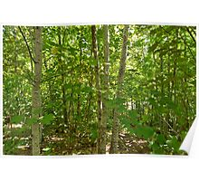 Looking Through Trees. Mt Franklin Poster