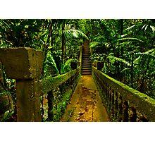 """Passage Through Paradise"" Photographic Print"