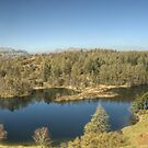Tarn Hows,English Lake District by Jamie  Green