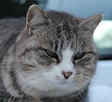Uninterested Cat by Steven Cousley